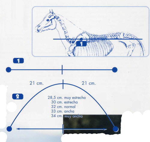 Saddle fitting guide this measurement can be used as the width guide for most makes of saddle ccuart Choice Image